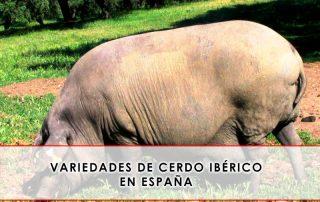 variedades de cerdo iberico en españa