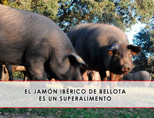 El jamón ibérico de bellota es un superalimento según la ciencia